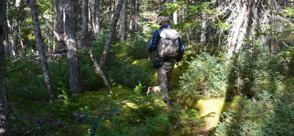 Got wilderness?